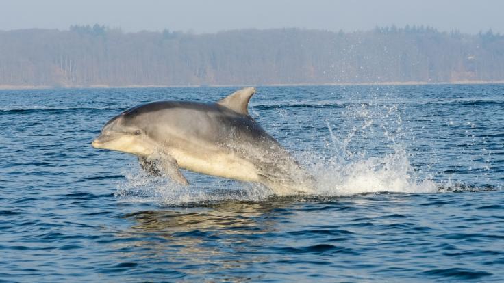 Der Wunsch, mit Delfinen zu schwimmen, kostete eine Frau aus Bielefeld fast das Leben. (Foto)