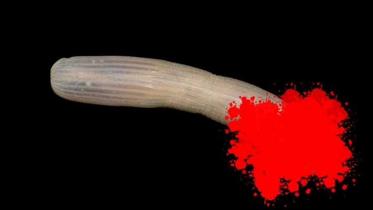 Forscher haben einen bizarren Tiefsee-Penis entdeckt.