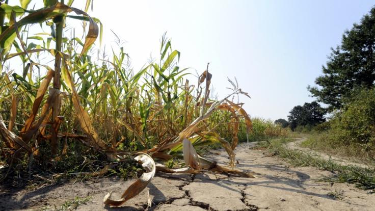 Droht uns im Sommer erneut eine Dürre? (Foto)