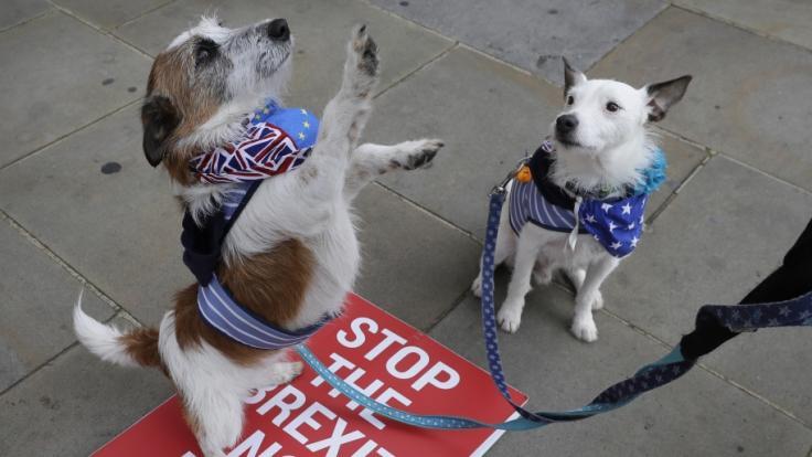 Eine Hundebesitzerin wurden von ihren Hunden mit der Leine erwürgt. (Foto)