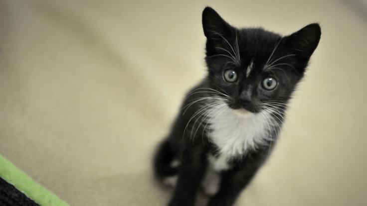 Ein Katzenhalter aus Dresden soll seine Tiere zum Teil zu Tode gequält haben (Symbolbild). (Foto)