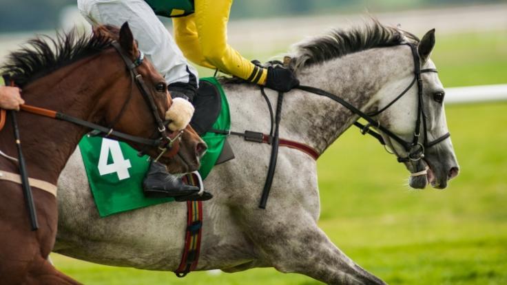 Ein Jockey wurde beim Pferderennen tot getrampelt. (Foto)