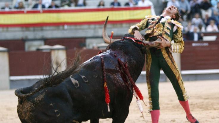 Der Stier hat den Torero mit seinem Horn aufgespießt.