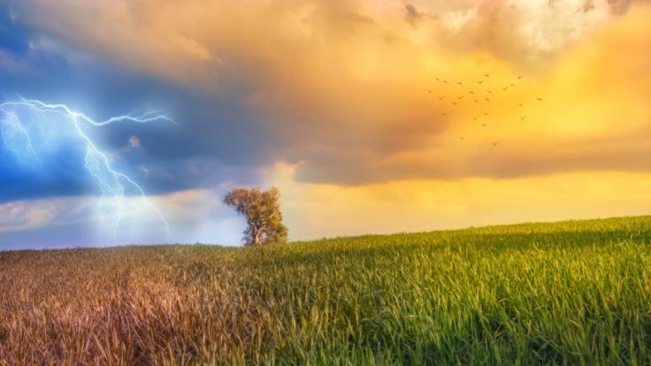 Meteorologen wagen eine erste Prognose fürs Sommerwetter. (Foto)