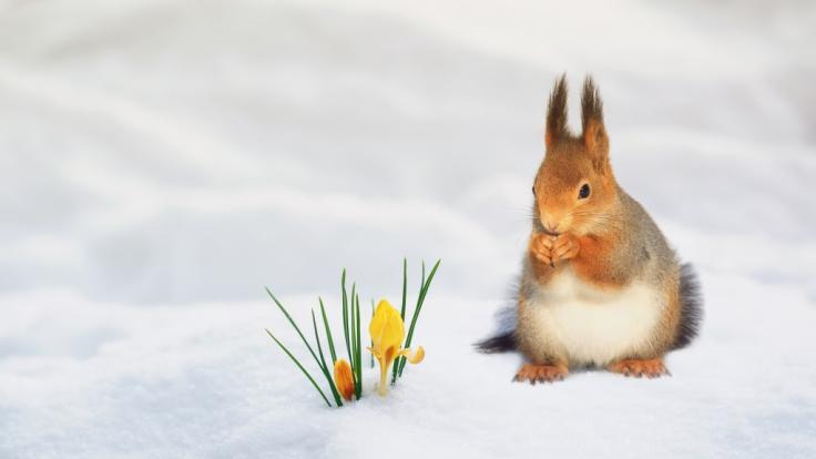 Wie wird das Wetter im ersten Frühlingsmonat?