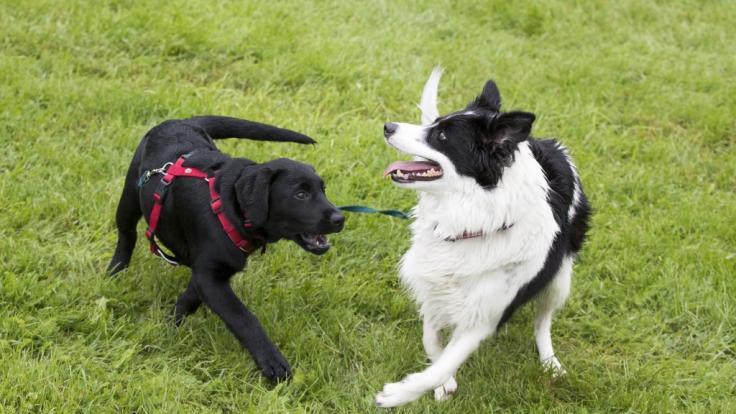 Hunde müssen jetzt ganz stark sein (Foto)
