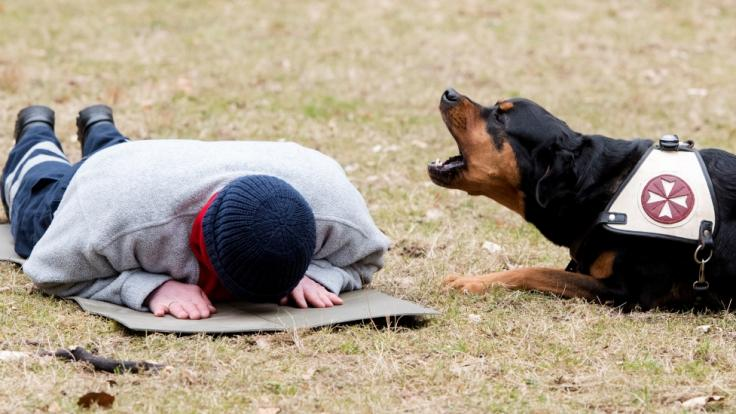 Ein Hund hat eine Seniorin im Urlaub gerettet. (Foto)