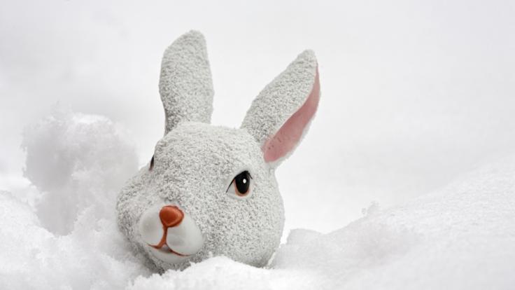 Droht uns ein weißes Osterfest? (Foto)