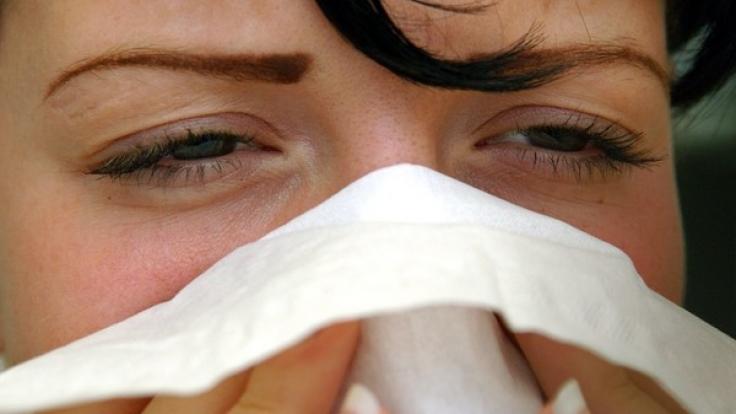 Pollen machen Heuschnupfen-Allergikern bereits im Januar zu schaffen.