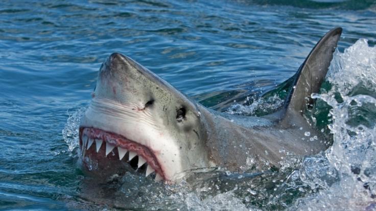 Im US-Bundesstaat Kalifornien wurde ein Surfer von einem Hai getötet. (Foto)