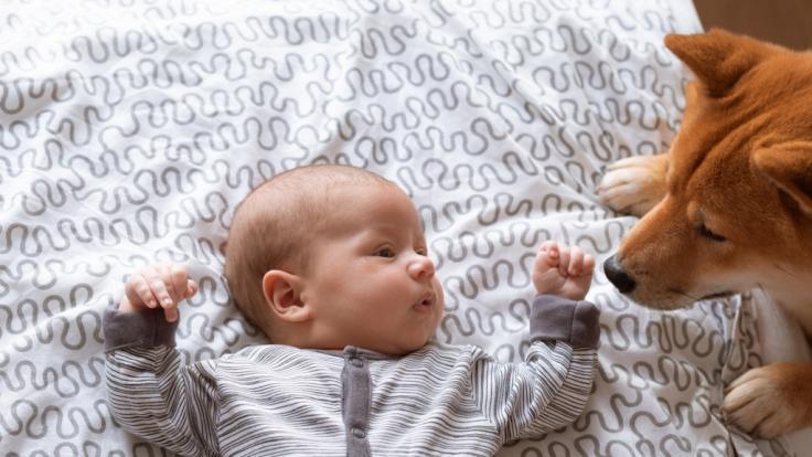 Ein vier Monate junges Baby kam in Ohio auf tragische Weise durch den Familienhund zu Tode.
