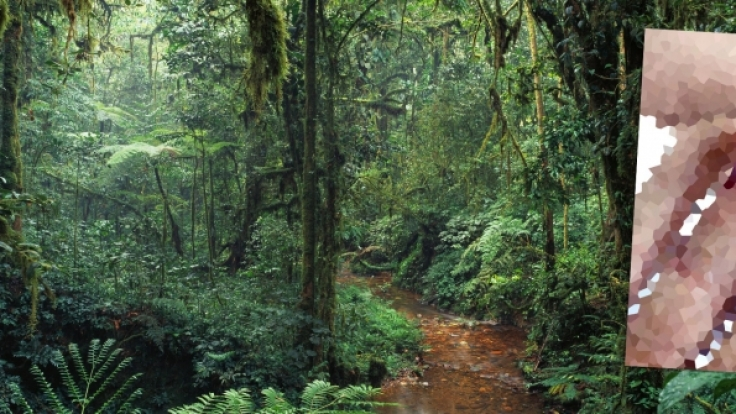 Kannibalen attackierten in Papua-Neuguinea zwei Touristen.