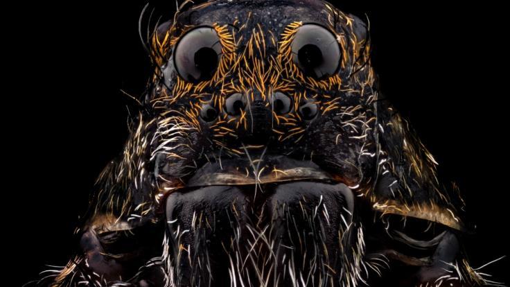 Lebten auf dem Mars einst Monster-Spinnen? (Foto)