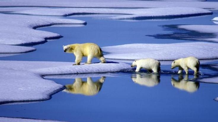 Bisher gab es vor allem Tiere, Kälte und Eis: Doch in den lebensfeindlichen Polargebieten beginnt nun der menschliche Wettlauf um Rohstoffe. (Foto)