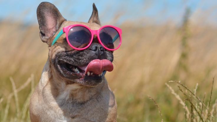 Kaum hat der Sommer 2020 offiziell begonnen, steht Deutschland die erste Hitzewelle ins Haus. (Foto)