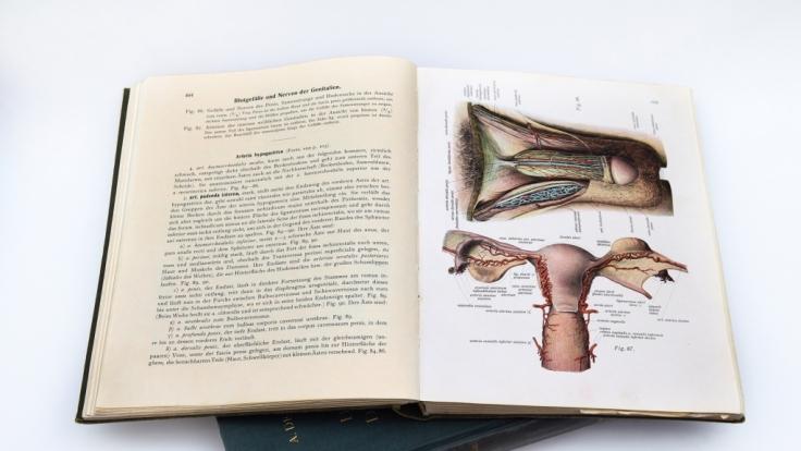 Mit einem Augenzwinkern widmen sich viele Bücher den menschlichen Genitalien. (Foto)