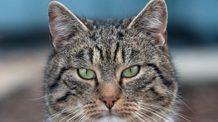 Rettungsaktion in letzter Sekunde: Eine Katze ist in Russland mit den Pfoten in einer Pfütze festgefroren, konnte jedoch von berherzten Passanten befreit werden (Symbolbild).