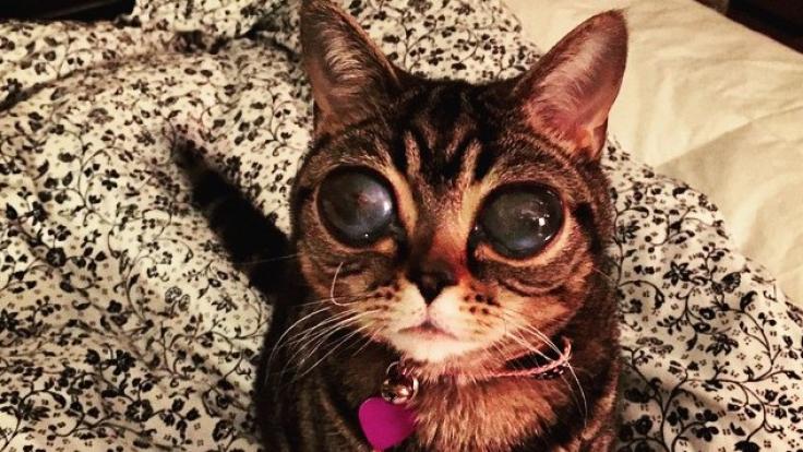 Matilda leidet an einer seltenen Augenkrankheit. (Foto)