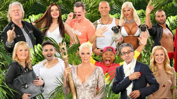Alle Kandidaten im Dschungelcamp: Jeden Tag müssen zwei von ihnen zur Dschungelprüfung antreten!