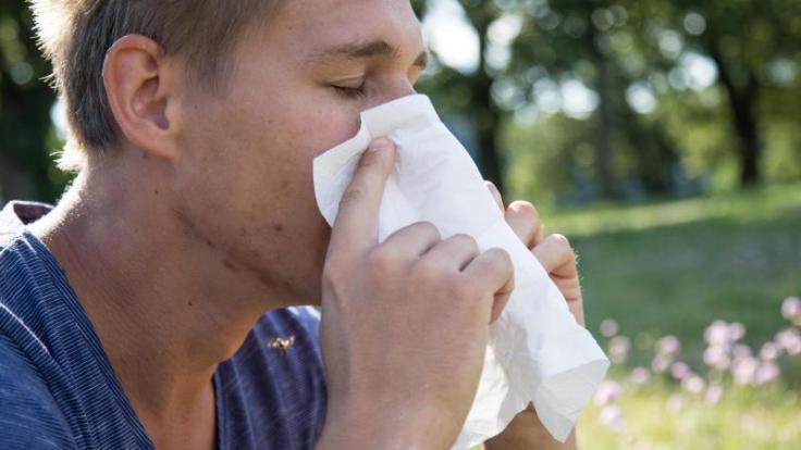 Kein Frühling zum Genießen: Für manche Betroffene ist Heuschnupfen nur nervig - andere leiden aber auch richtig darunter. (Foto)