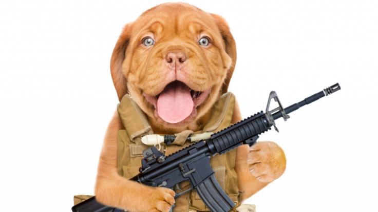 Bei einem Jagdausflug soll ein Hund die Waffe seines Herrchens ausgelöst haben. (Symbolbild)