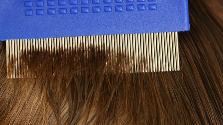 Bei der Behandlung gegen Kopfläusen ist ein Läusekamm unerlässlich. (Foto)