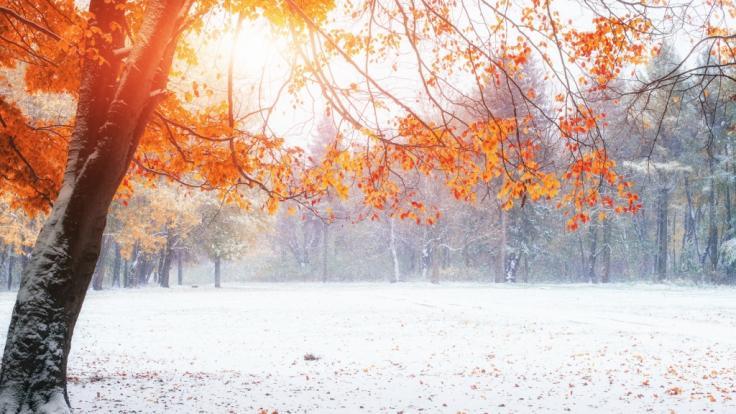 Der Herbst hält Einzug.