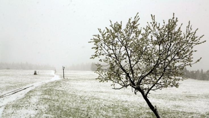 Ein für Mai eher ungewöhnlicher Anblick - eine geschlossene Schneedecke.