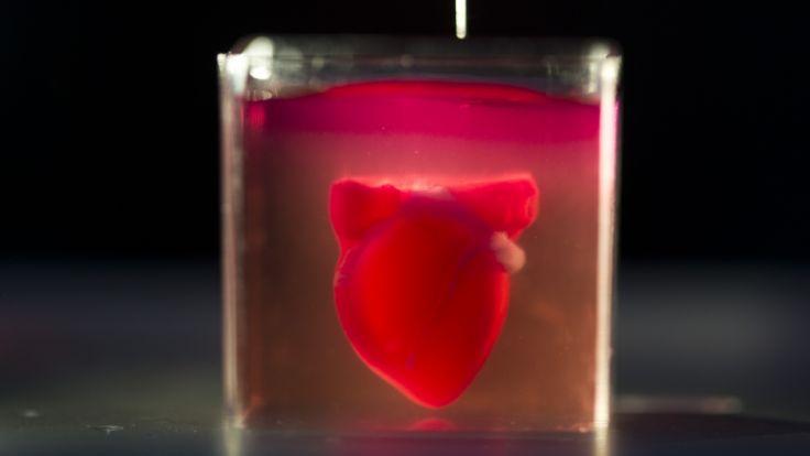 Erstes Herz aus 3D-Drucker