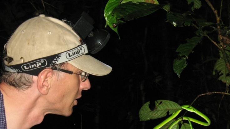Biologe Ulmar Grafe nimmt die ICE-Schlange im Regenwald von Brunei in Augenschein. (Foto)