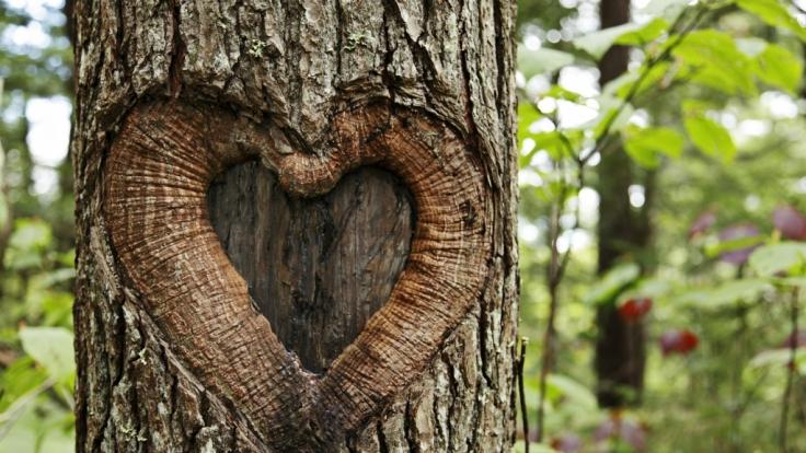 Emma McCabe liebt einen Baum und will ihn heiraten.