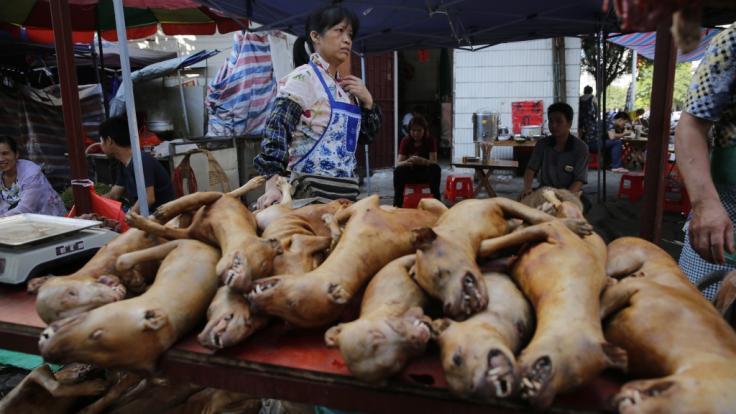 Beim Hundefleisch-Festival in China werden jährlich Tausende Tiere verspeist. (Foto)