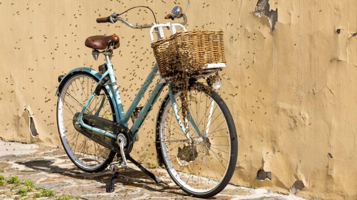 Ein Bienenschwarm hat sich auf einem Fahrrad niedergelassen.