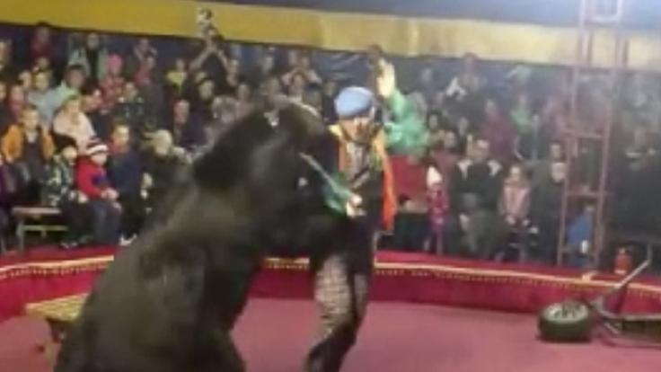 In Russland attackierte ein Zirkus-Bär seinen Dompteur. (Foto)