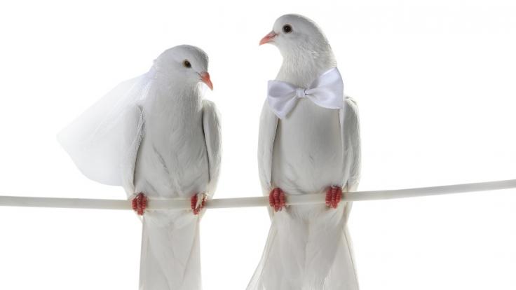 Sie heiraten Felsen, Bäume und den Eiffelturm - Das sind die skurrilsten Hochzeiten aller Zeiten. (Foto)