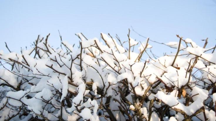 Wer seine Hecke loswerden möchte, muss sich beeilen. Ab dem 1. März ist etwa das Roden von Sträuchern und Hecken verboten.