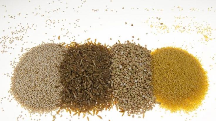 Geballte Körnerkraft: Quinoa, Grünkern, Buchweizen und Hirse sind gesund und vielseitig einsetzbar. (Foto)