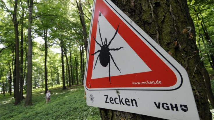 Lauern Zecken wirklich auf Bäumen? news.de klärt auf.