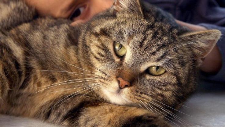 Vorsicht beim Knuddeln: Haustiere können Erreger übertragen.