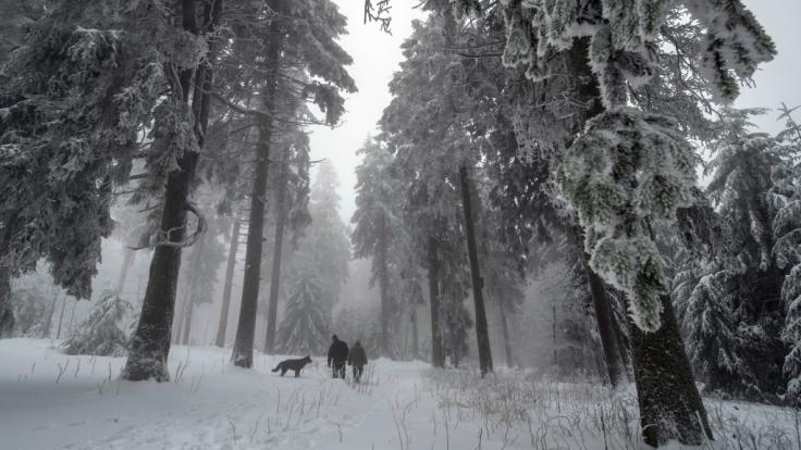 Zur Strafe soll eine russische Mutter ihr Kind im Wald ausgesetzt haben (Symbolbild).