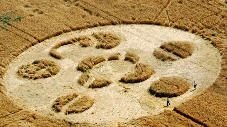 Mysteriöse Kornkreise nahe einem Getreidefeld beim brandenburgischen Schönwalde (Dahme-Spreewald. (Foto)