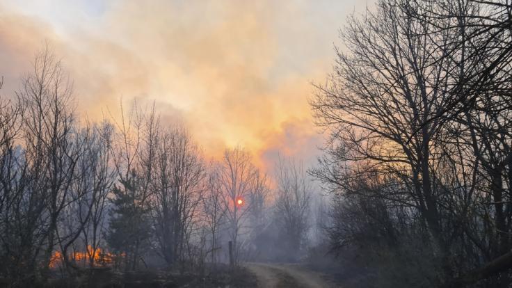 In einem radioaktiv verseuchten Wald nahe Tschernobyl wütet ein Feuer. (Foto)