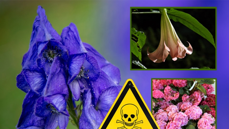 So schön und so gefährlich: Giftpflanzn im Vorgarten.