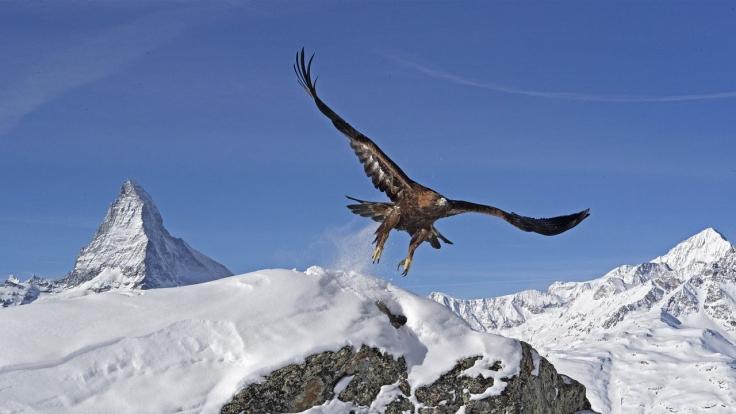 Die Alpen bei Das Erste (Foto)