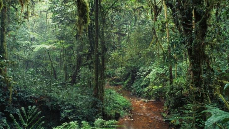 Die Guerilla-Kämpfer versteckten sich über Jahrzehnte im Dschungel.