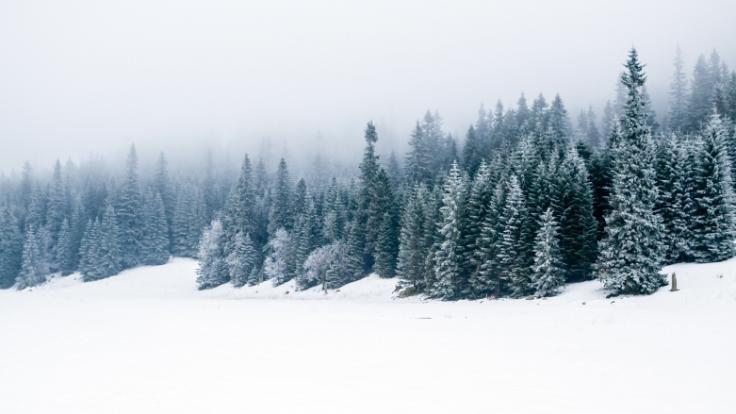 Droht Deutschland ein arktischer Winter? (Foto)