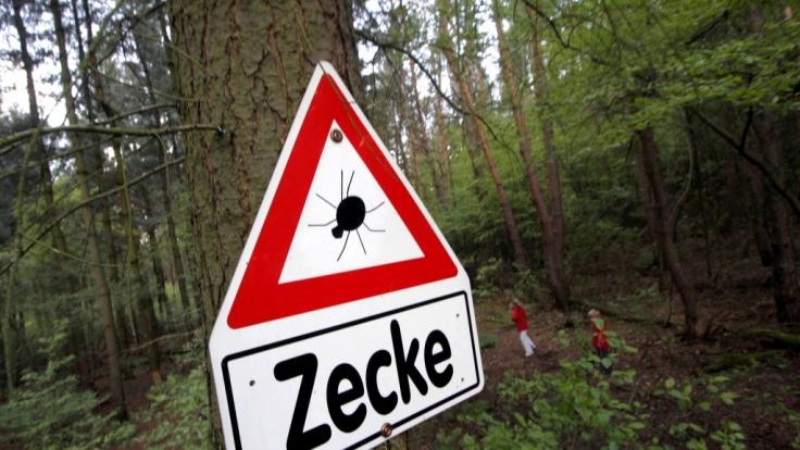Im Wald lauert die Gefahr: Es ist Zeckensaison.
