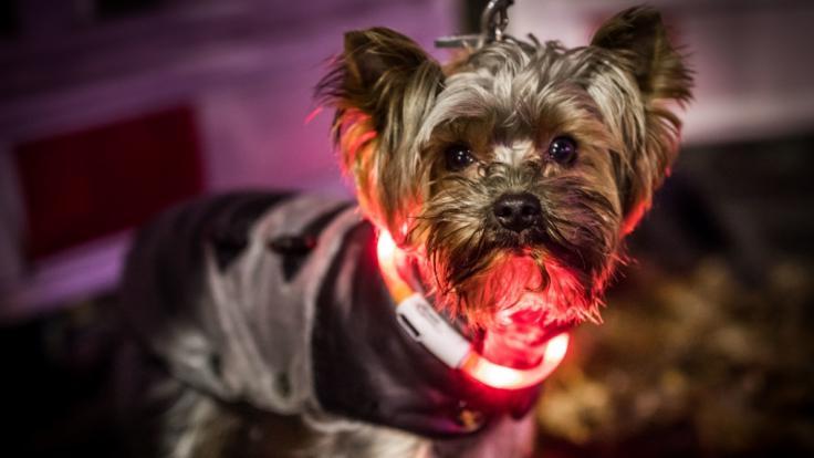 In Richmond hat eine Hundebesitzerin ihren Vierbeiner einschläfern lassen, um gemeinsam beerdigt zu werden. (Foto)