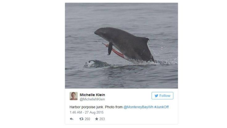 Imposantes Geschlechtsorgan eines Delfins. (Foto)
