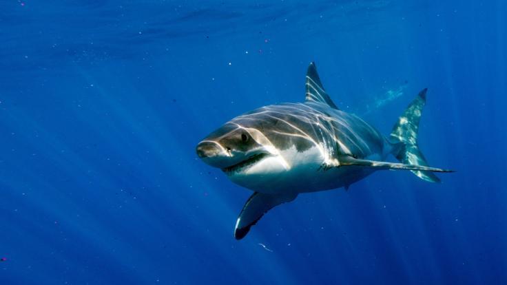 In Ägypten ist ein Tourist bei einem Hai-Angriff gestorben. (Foto)
